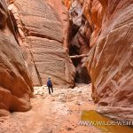Buckskin Gulch - Paria Canyon - Vermilion Cliffs Wilderness, Utah