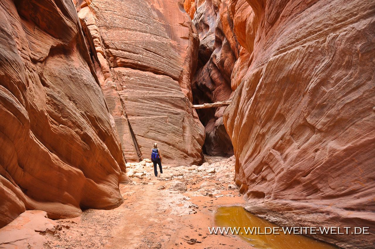 Buckskin Gulch - Paria Canyon - Vermilion Cliffs Wilderness, Utah