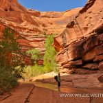 Crack-in-the-Wall-Coyote-Gulch-Hole-in-the-Rock-Road-Grand-Staircase-Escalante-National-Monument-Utah-3 Coyote Gulch