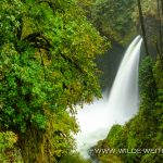Metlako Falls - Eagle Creek, Columbia River Gorge, Oregon