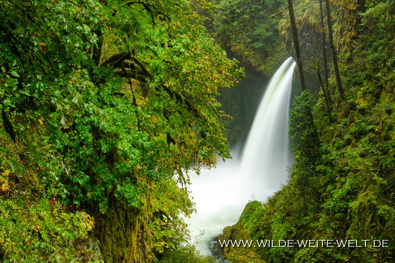 Metlako Falls - Eagle Creek, Columbia River Gorge, Oregon
