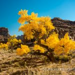 Fall-Color-in-Buckhorn-Draw-San-Raffael-Swell-Castle-Dale-Utah-23 Buckhorn Draw