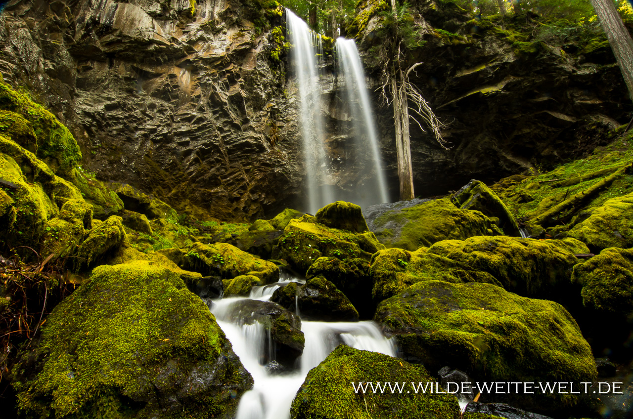 Grotto Falls - Little River Area, Umpqua National Forest, Oregon