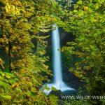 North-Falls-Silver-Falls-State-Park-Oregon North Falls [Silver Falls State Park]