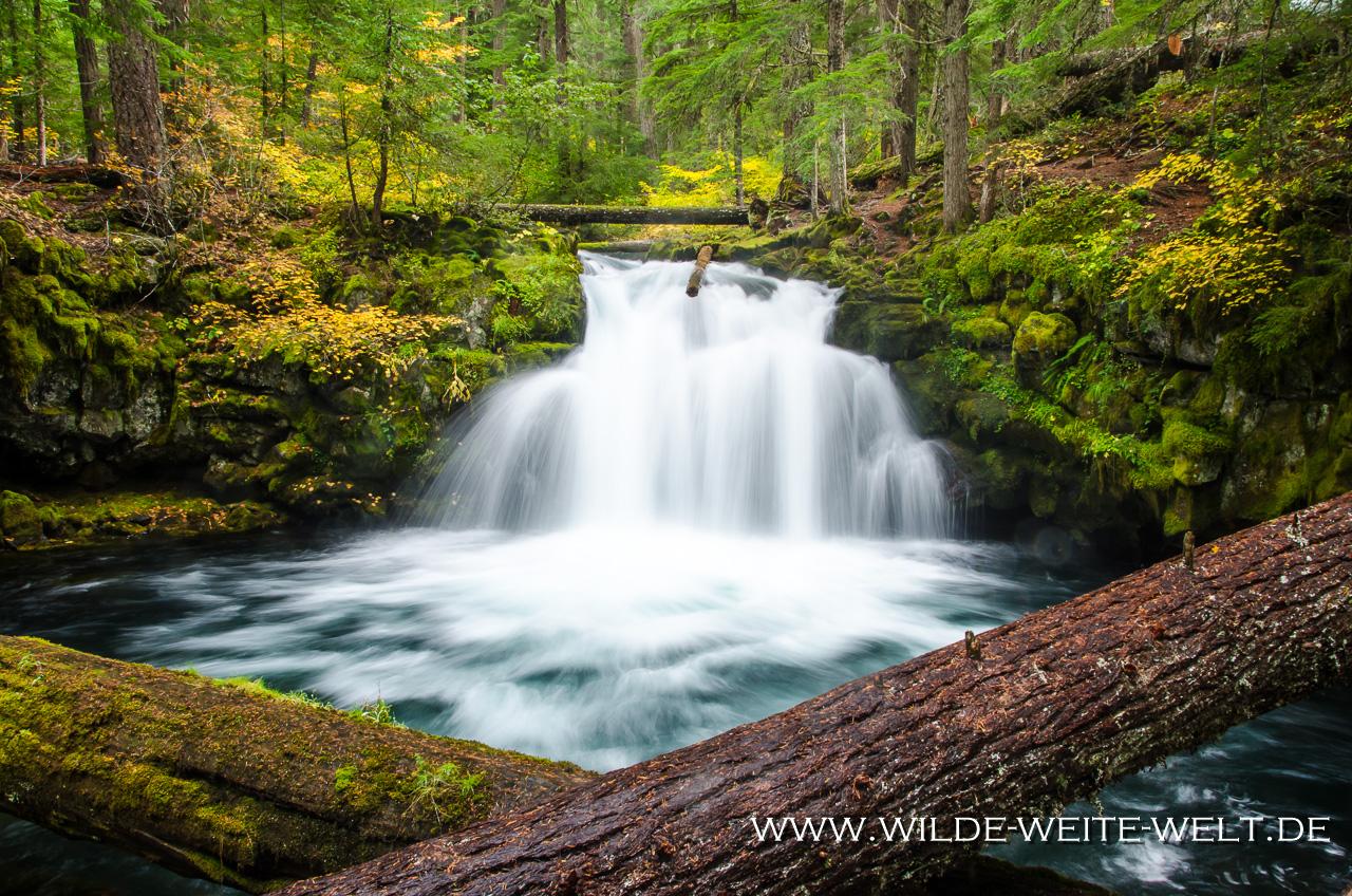 Whitehorse Falls - Umpqua National Forest, Oregon
