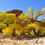 Lower-Hackberry-Canyon-Cottonwood-Canyon-Road-Grand-Staircase-Escalante-National-Monument-Utah-7 Hackberry Canyon und Sam Pollock Arch