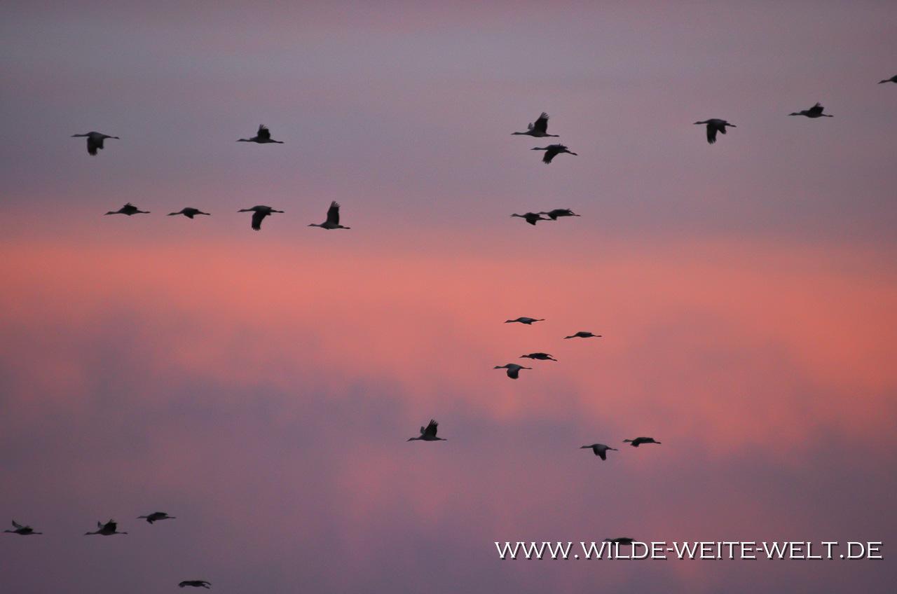 Sandhill-Cranes-Bitter-Lake-National-Wildlife-Refuge-Roswell-New-Mexico-13 Bitter Lake National Wildlife Refuge: Kraniche