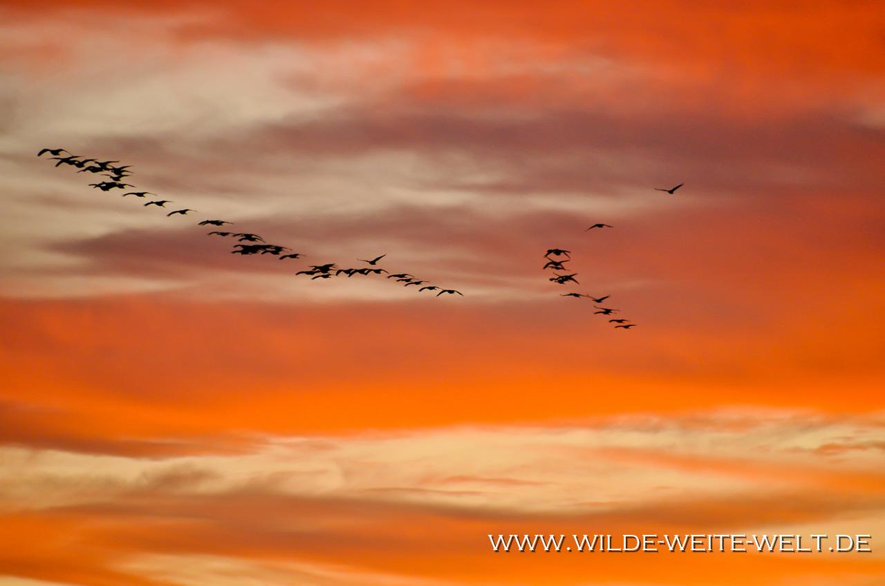 Bitter Lake National Wildlife Refuge, Roswell, New Mexico
