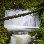 Dutchmen Falls - Columbia River Gorge, Oregon