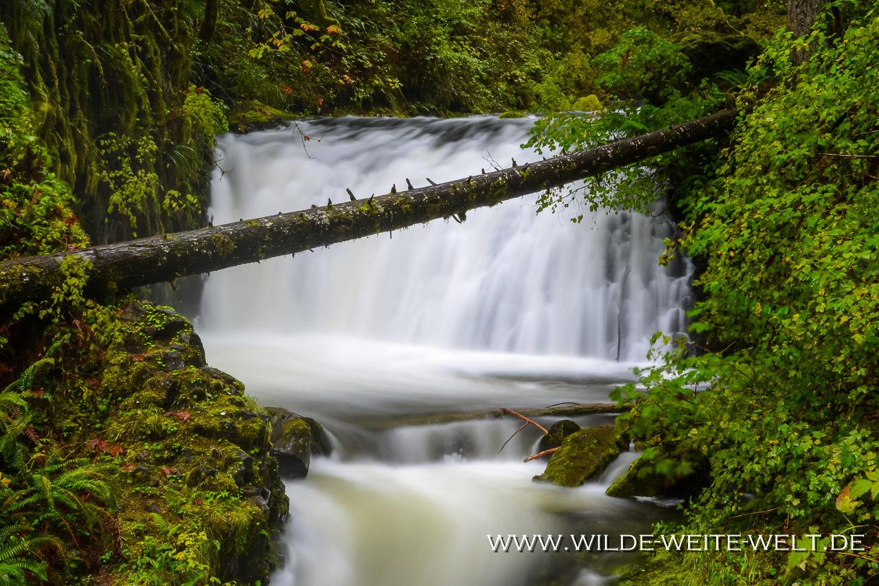 Dutchmen Falls - Columbia River Gorge, Oregon