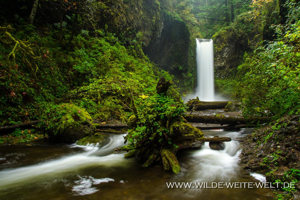 Wiesendanger Falls - Columbia River Gorge, Oregon