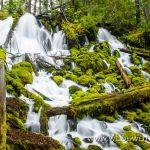 Clearwater Falls - Umpqua National Forest, Oregon