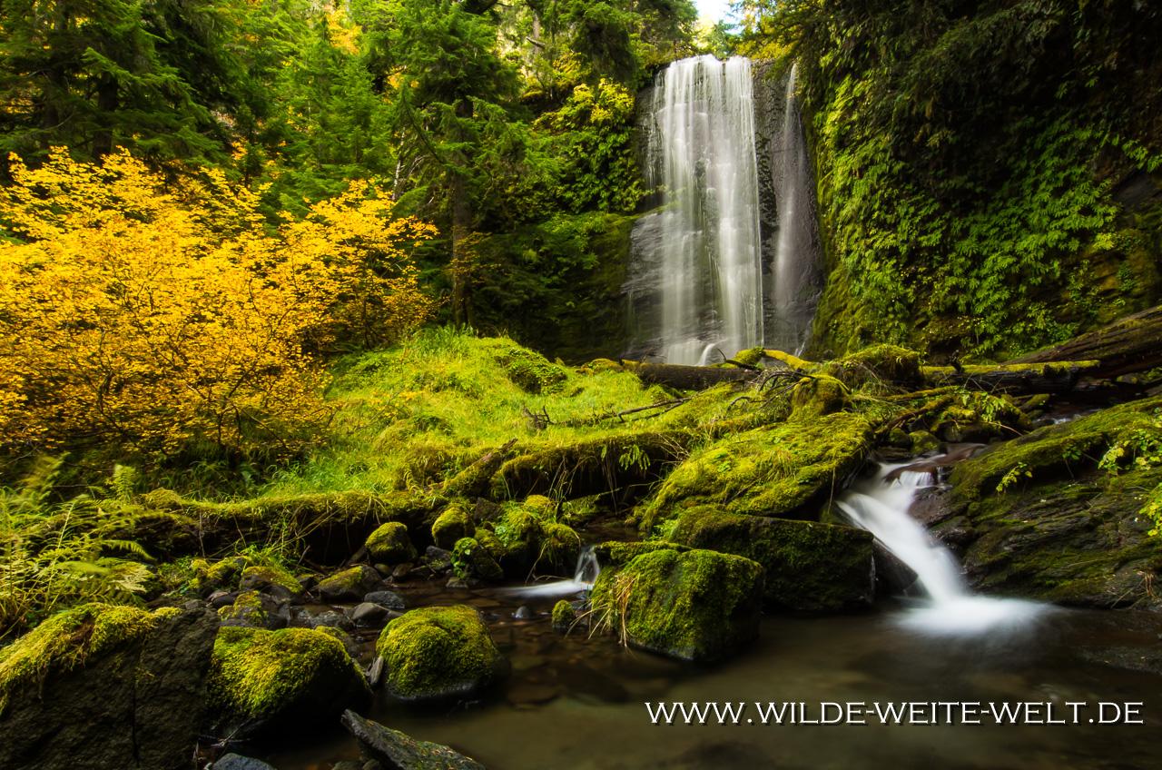 Clover Falls - Little River Area, Umpqua National Forest, Oregon