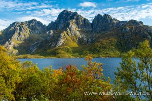Herbstfaerbung-Vestpollen-Lofoten-Norwegen-300x200 Herbstfärbung