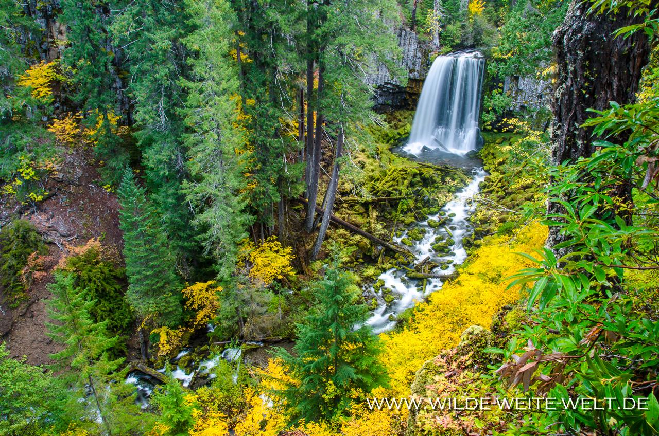 Warm Springs Falls - Umpqua National Forest, Oregon