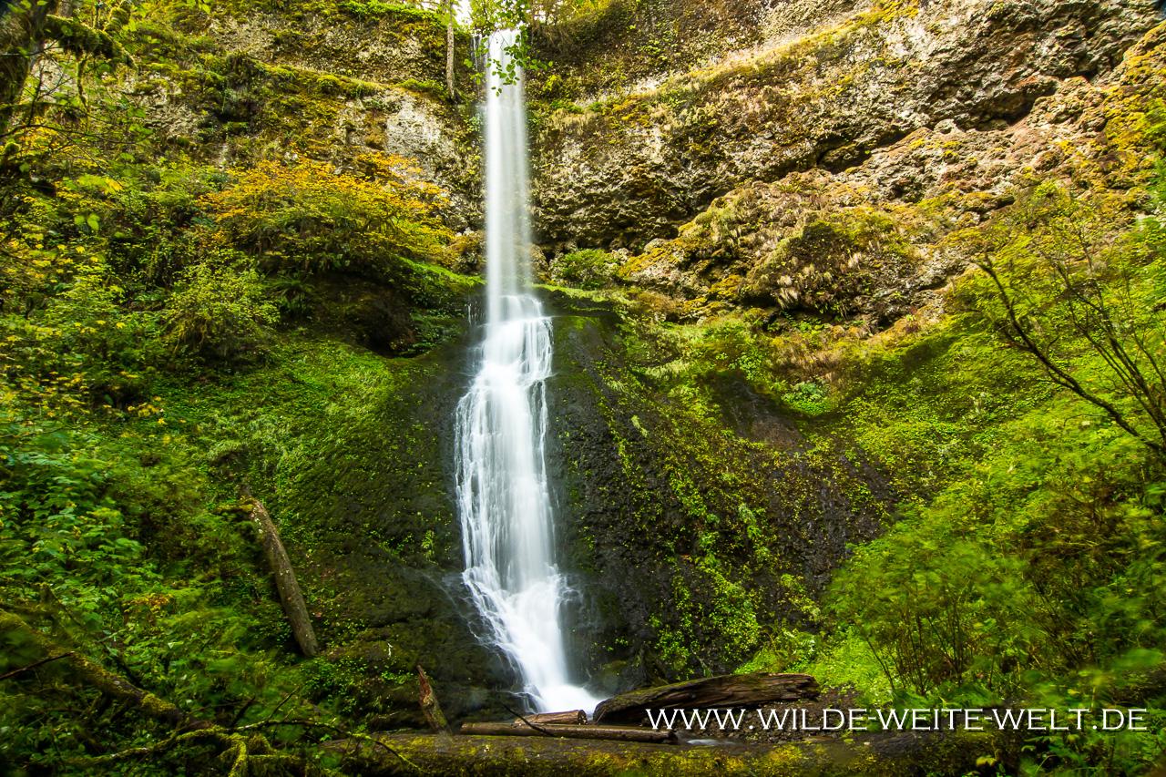 Winter Falls - Silver Falls State Park, Oregon