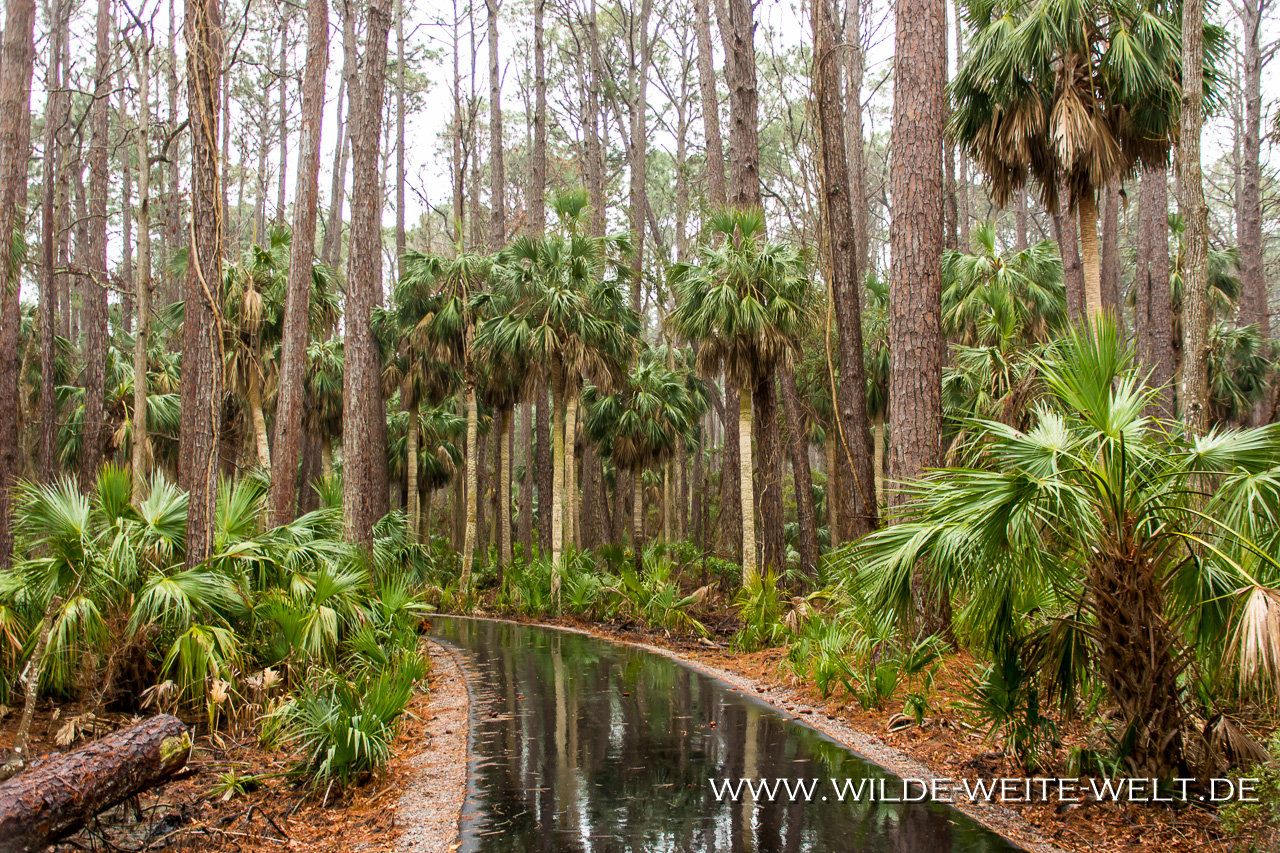 Küstenwald-Hunting-Island-State-Park-South-Carolina Nr. 2: How is it going [bis 4. Februar 2018]