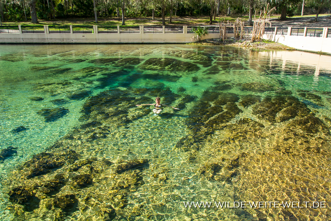 Silver-Glen-Springs-Silver-Glen-Springs-Recreation-Area-Ocala-National-Forest-Florida-7-1 Nr. 4: How is it going [bis 20. Februar 2018]