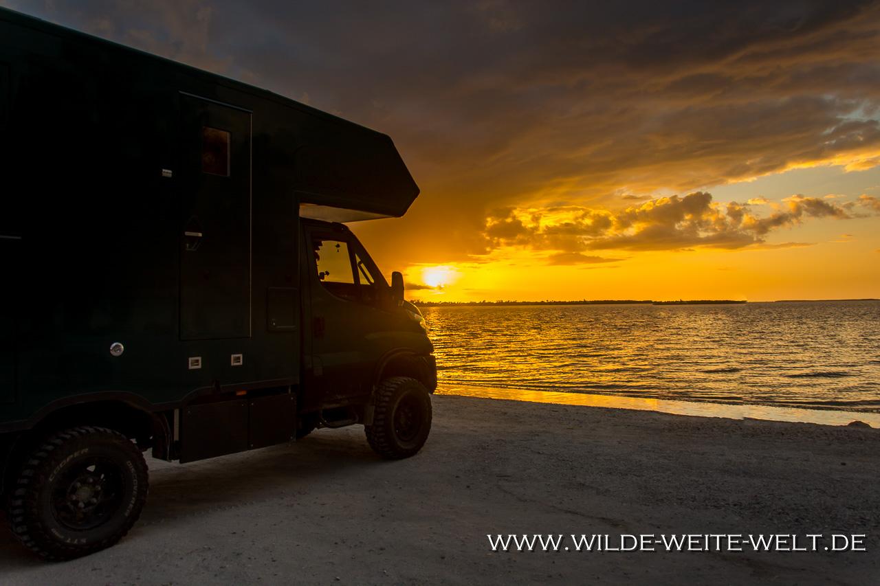 Würgefeige-Fakahatchee-Strand-Preserve-Florida-1 Nr. 6: How is it going [bis 4. März 2018]