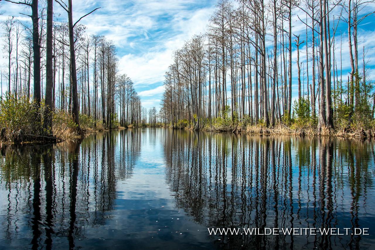 Suwannee-Canal-Okefenokee-National-Wildlife-Refuge-Georgia-3 Okefenokee National Wildlife Refuge [Georgia]
