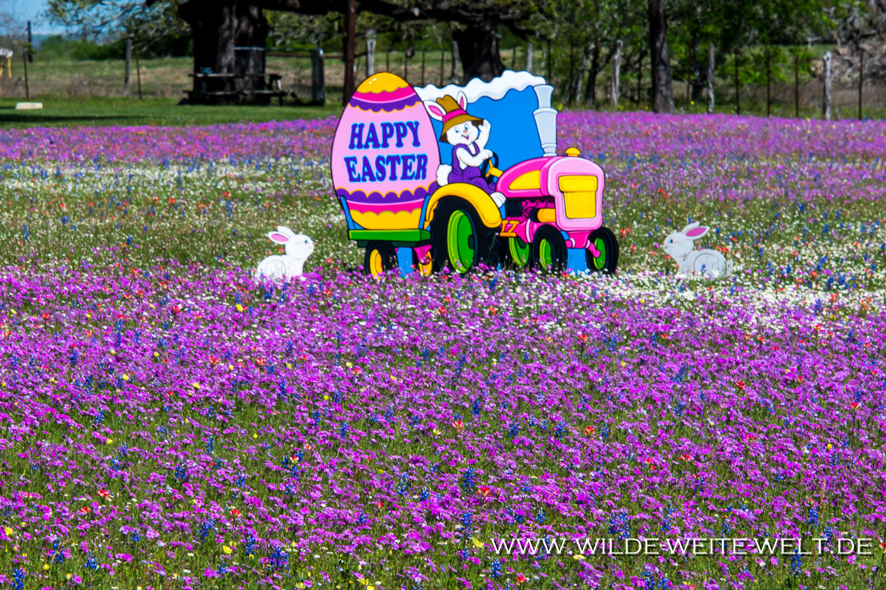 Frühlingsblumen-Gonzales-Texas-4 Nr. 9: How is it going [bis 22. März 2018]