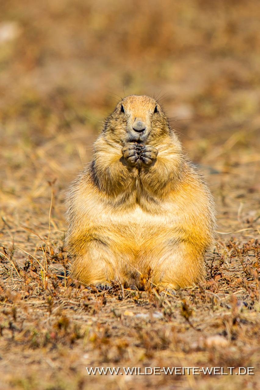 Bienenkästen-Spring-Creek-South-Dakota-3 Nr. 21: How is it going [bis 25. September 2018]