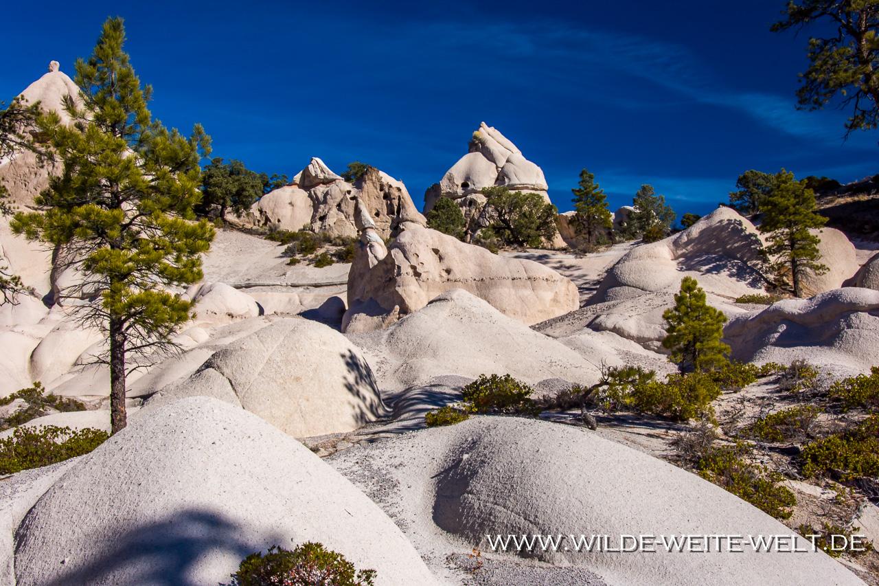 Pine-Park-Dixie-National-Forest-Utah-120 Pine Park [Utah]