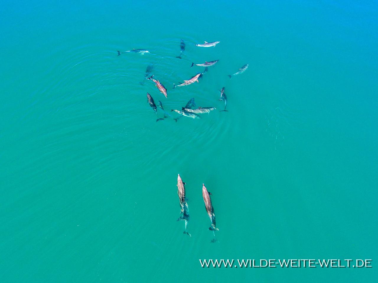 Dolphins-Punta-Prieta-Mulegé-Baja-California-Süd-19 Delfine / Dolphins Punta Prieta bei Mulegé [Mexico / Baja California]