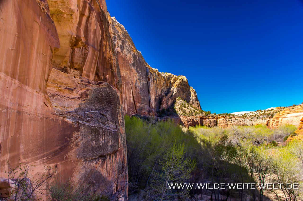Escalante-Natural-Bridge-Escalante-Canyon-Grand-Staircase-Escalante-National-Monument-Utah-12 3 x Arches entlang des Escalante Rivers: Escalante Natural Bridge, Cliff House Arch & Bowington Arch [Grand Staircase Escalante National Monument]