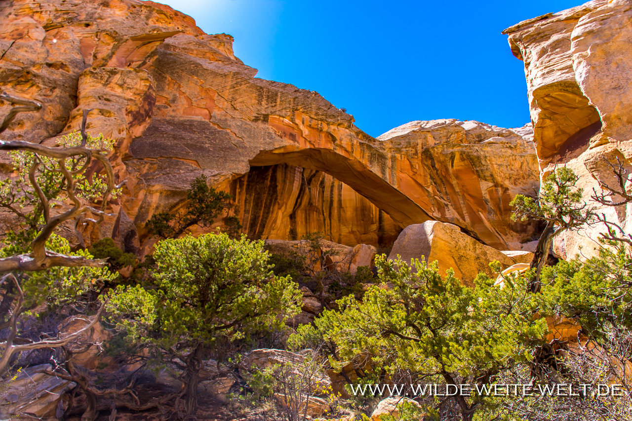 Upper-Muley-Twist-Canyon-Capitol-Reef-National-Park-Utah-2 10 x Arches am Upper Muley Twist Canyon [Capitol Reef National Park, Utah]