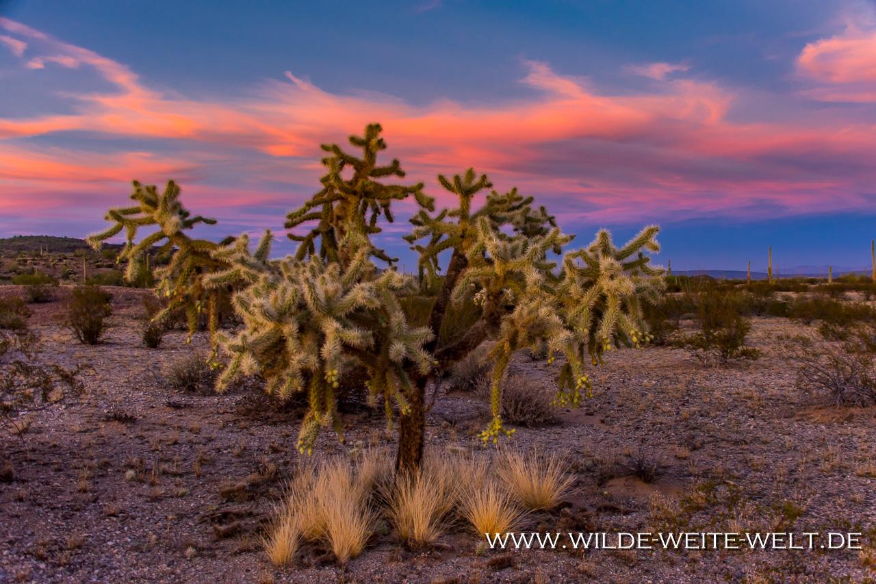 Saguaro-Cabeza-Prieta-National-WIldlife-Refuge-Ajo-Arizona-12 Cabeza Prieta National Wildlife Refuge: Saguaro & Sonora Desert