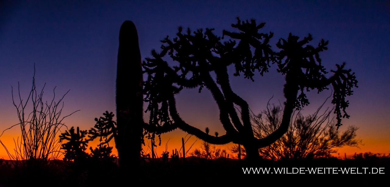 Sonoran-Desert-Landscape-Ironwood-Picnic-Area-Tucson-Mountain-County-Park-Arizona-36 Tuscon Mountain Park & Arizona Sonora Desert Museum