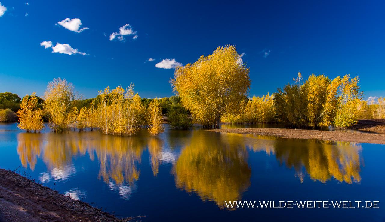 Hawk-Cibolla-National-Wildlife-Refuge-Arizona-6 Cibola National Wildlife Refuge: Sandhill Cranes [Arizona]