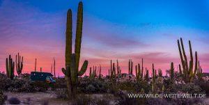 bernachtungsplatz-Catavinia-Baja-California-Norte-16-300x151 Übernachtungsplatz