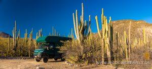 bernachtungsplatz-Jardin-Botanico-Helia-Bravo-Hollis-Reserva-de-la-Biosfera-Tehuacan-Cuicatlan-Zapotitlan-Puebla-2-300x136 Übernachtungsplatz