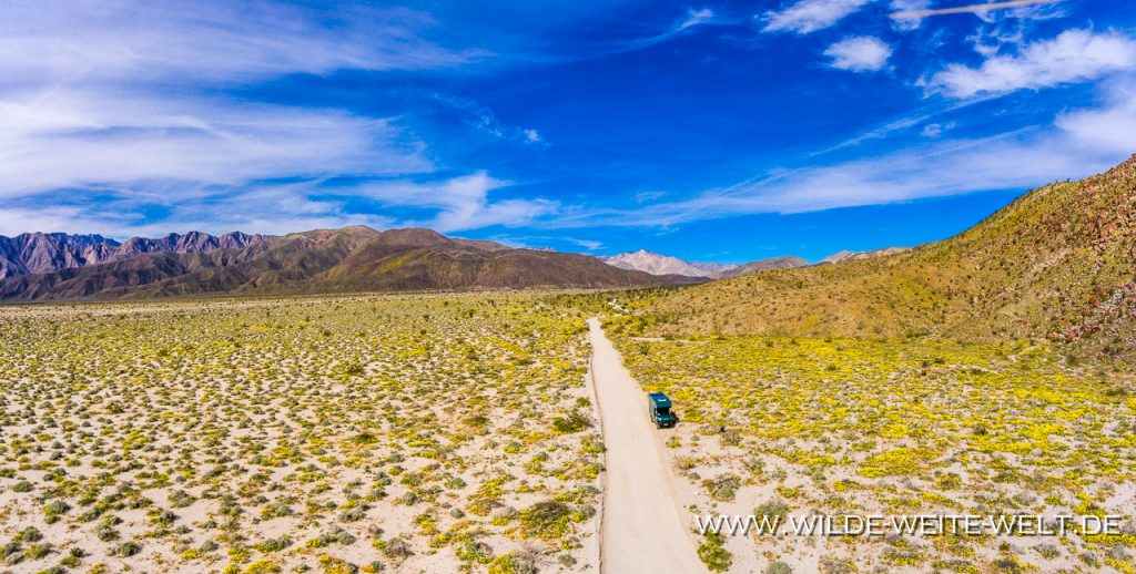 Desert-Flowers-Coyote-Canyon-Anza-Borrego-State-Park-California-1024x518 Iveco Daily 4x4: Foto-Galerie # 4 Offroad-Camper Willy - Canada & Alaska