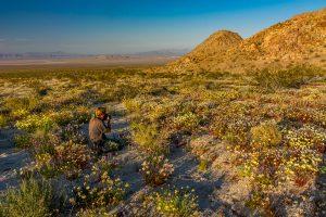 Desert-Flowers-mit-Tanja-Sheephole-Mountains-Amboy-Road-California-300x200 Desert Flowers mit Tanja