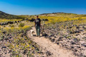 Desert-Sunflower-mit-Tanja-und-Trixie-Amboy-Crater-National-Natural-Landmark-California-300x200 Desert Sunflower mit Tanja und Trixie
