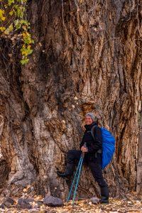 Giant-Cottonwood-Eagle-Canyon-Morenci-Arizona-200x300 Giant Cottonwood