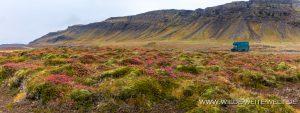 Herbstfärbung-Breidafjördur-Stykkisholmur-54-Island-300x113 Herbstfärbung