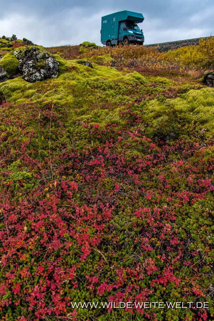 Eriophorum-Njardvik-Island-1024x314 Iveco Daily 4x4: Foto-Gallery # 6 Offroad-Camper - Iceland