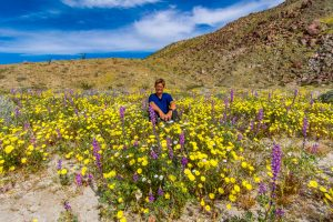Lupine-and-Desert-Dandelion-mit-Tanja-Coyote-Canyon-Anza-Borrego-State-Park-California-300x200 Lupine and Desert Dandelion mit Tanja