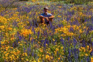 Mexican-Poppies-und-Lupine-mit-HP-Bartlett-Lake-Tonto-National-Forest-Arizona-300x200 Mexican Poppies und Lupine mit HP
