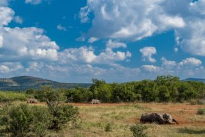Breitmaulnashorn-Hluhluwe-iMfolozi-National-Park-KwaZulu-Natal-Suedafrika-69-300x200 Breitmaulnashorn
