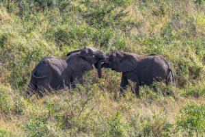 Elefantenherde-Hluhluwe-iMfolozi-National-Park-KwaZulu-Natal-Suedafrika-14-300x200 Elefantenherde