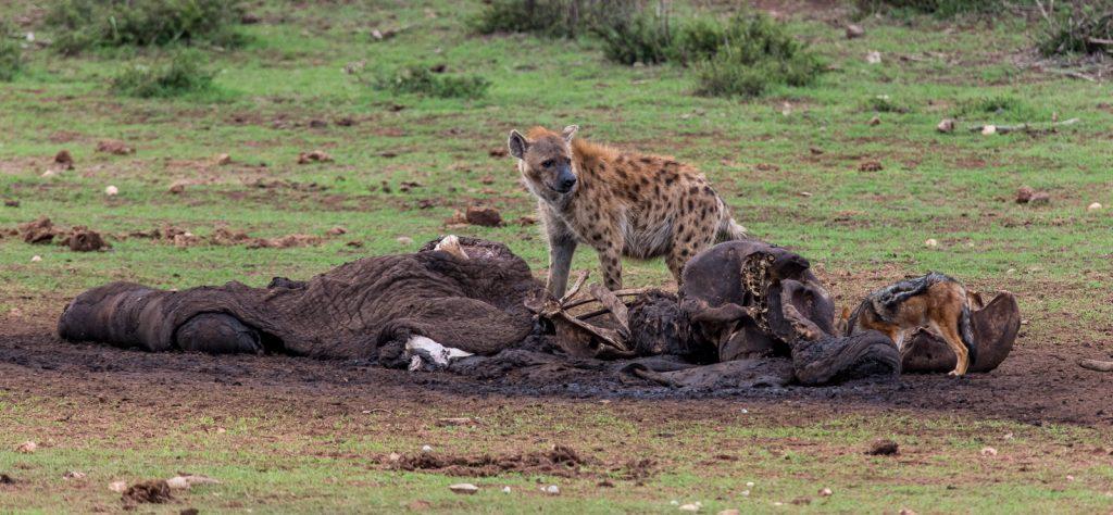 Alexandria-Dunes-Pearson-Park-Nature-Reserve-Colchester-Suedafrika-14-1024x379 Addo Elephant National Park [South Africa]