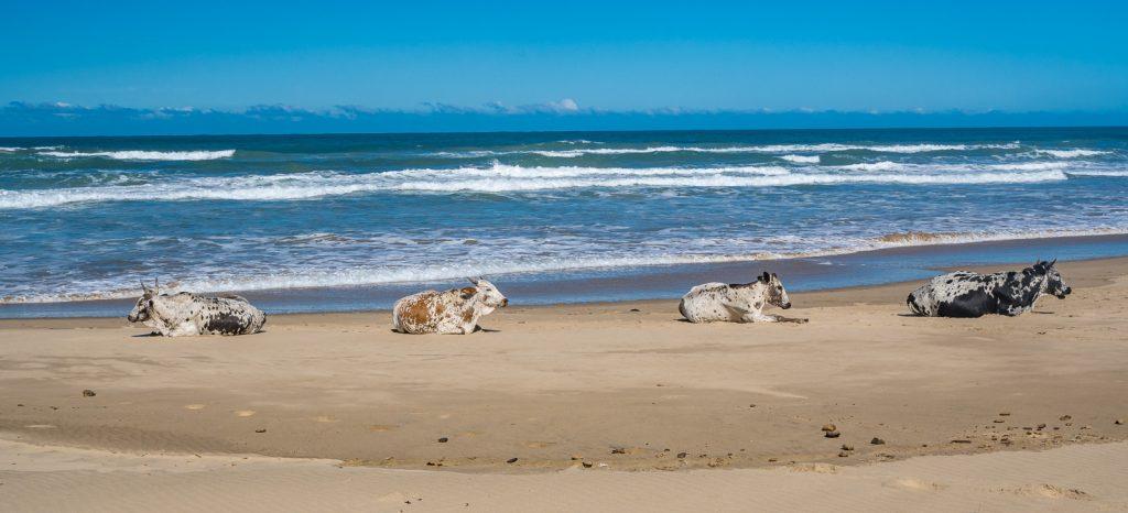 Hole-in-the-Wall-Coffee-Bay-Suedafrika-25-1024x682 Wild Coast [South Africa]