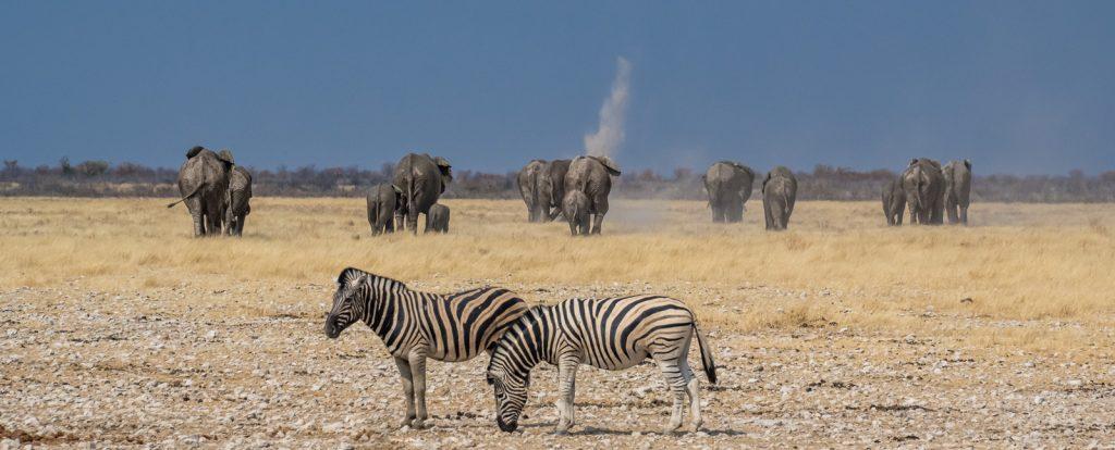Loewe-60-66-Olifantsbad-Road-Etosha-National-Park-Oshikoto-Namibia-45-1024x683 Etosha Park, Namibia